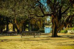 Tucson, Arizona oazy park Obraz Stock
