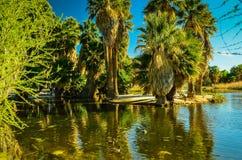 Tucson, Arizona oazy park Fotografia Stock