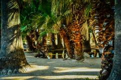 Tucson, Arizona oazy park Obrazy Royalty Free