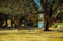 Tucson den Arizona oasen parkerar Fotografering för Bildbyråer