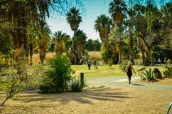 Tucson den Arizona oasen parkerar Royaltyfri Bild