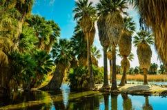 Tucson den Arizona oasen parkerar Arkivfoto