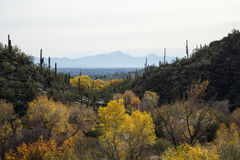 Tucson Landscape Stock Photo