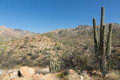 Tucson landskap Arkivfoto