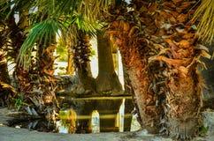 Tucson, parque del oasis de Arizona Fotografía de archivo