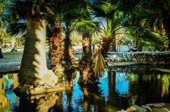 Tucson, parque del oasis de Arizona Imagen de archivo