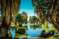 Tucson, parque del oasis de Arizona Fotos de archivo