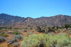 Tucson - parque nacional del Saguaro Imagen de archivo