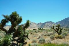 Tucson - parque nacional del Saguaro Fotografía de archivo libre de regalías