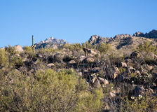 Tucson's Catalina State Park Royalty Free Stock Photo