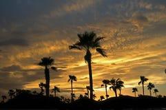 Tucson sommarsolnedgång Arkivbild