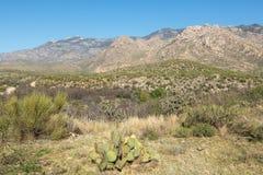 Tucsons öken Arkivfoto