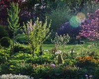 Tudo é verde e a árvore de maçã da flor, flores floresce nas cavidades fotografia de stock royalty free