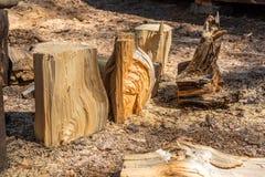 Tudo no mundo tem uma extremidade, e qualquer parte de madeira torna-se uma lenha ou podre fotografia de stock
