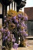 Tudor antyka domu Blakesley Hall żałość dratwy wejściowego winogradu dekoracyjny drzewny kwiat uk Birmingham fotografia stock