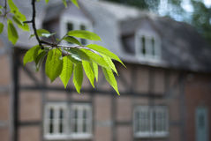 Tudor house through cherry tree leaves. Stock Image