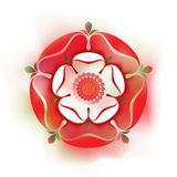 Tudor Rose - illustrazione - stile acquerello - simbolo inglese Fotografie Stock