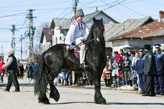 Tudorita. Boy on black horse. Image taken at the Tudorita festival in Targoviste, Romania. Tudorita or Pastele Cailor festival took place March 3 Royalty Free Stock Photos