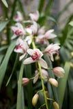 Tuebingen Tyskland Februari 13,2016: Orkidér på botaniska trädgården royaltyfri fotografi