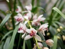 Tuebingen Tyskland Februari 13,2016: Orkidér på botaniska trädgården arkivbilder