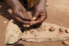 Tuerca de Karitè Imagen de archivo
