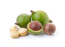 Tuercas de macadamia en el fondo blanco Imagenes de archivo