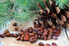 Tuercas de pino, con los conos del cedro y el árbol de abeto Fotografía de archivo