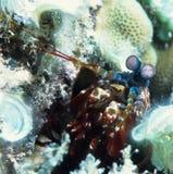Tuffandosi sotto l'acqua Immagine Stock Libera da Diritti