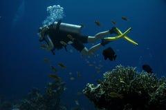 tuffatore Coral Reef fotografia stock