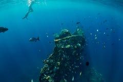 Tuffo libero dell'uomo dell'operatore subacqueo al naufragio, mare subacqueo immagini stock