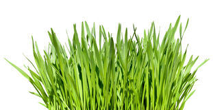 Tuft of grass. Isolated over white background Stock Photo