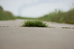 Tuft of grass. A tuft of grass growing out of a concrete street Stock Image