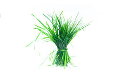 Tuft of grass  Stock Photos