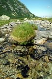 Tuft of grass. Small tuft of grass on midlle of the mountain stream stock photo