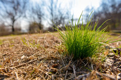 Tuft of grass in the autumn. With front light Stock Photo