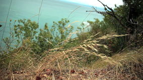 Tuft of grass and green bushes at the sea shore. Sea shore with sea in the back stock video footage