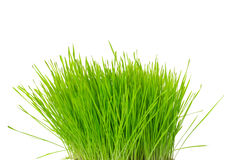 Tuft of grass Royalty Free Stock Photos
