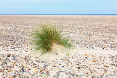 Tuft of grass in the sand Stock Image