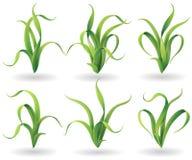 Tuft of grass set. Tuft of green grass set    on white Stock Image