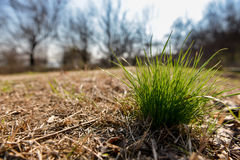 Tuft of green grass. In autumn landscape Stock Photography