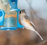 Tufted mes på en fågelförlagematare Arkivbild