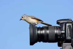 Tufted Titmouse on a Camera Royalty Free Stock Image