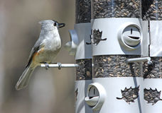 Tufted Titmouse at feeder Royalty Free Stock Photos
