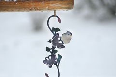 Tufted Titmouse hangs from a metal ornament. Royalty Free Stock Images