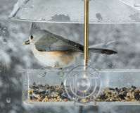 Tufted Titmouse in window bird feeder Stock Images