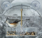 Tufted Titmouse in window bird feeder Royalty Free Stock Images