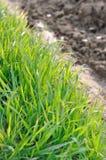 Göra grön gräs Royaltyfri Foto