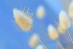Tufts on blue Royalty Free Stock Images