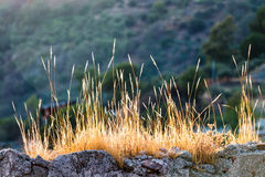Tufts of dry grass Stock Image