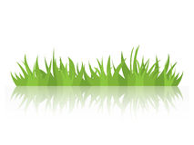 Tufts of grass with a mirror image. Natural element of design. Royalty Free Stock Image